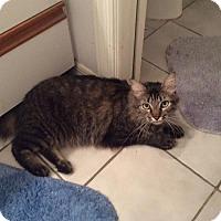 Adopt A Pet :: Jellybean - Venice, FL