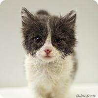 Adopt A Pet :: Hera - Los Angeles, CA