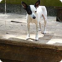 Adopt A Pet :: Basil - Old Town, FL