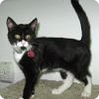 Adopt A Pet :: Shakera - Powell, OH