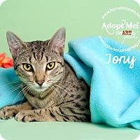 Adopt A Pet :: Tony - Houston, TX