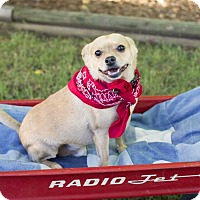 Adopt A Pet :: Biscuit - Livonia, MI