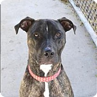 Whippet Mix Dog for adoption in Delaware, Ohio - Mobley