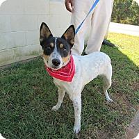 Adopt A Pet :: 16D-1636 (10/30) - Rome, GA