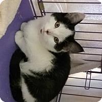 Adopt A Pet :: Anza - San Jose, CA