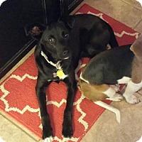 Adopt A Pet :: Colleen - Cincinnati, OH