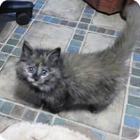Adopt A Pet :: Raggedy Ann - North Wilkesboro, NC