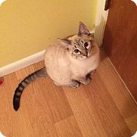 Adopt A Pet :: Gem - Greeley, CO