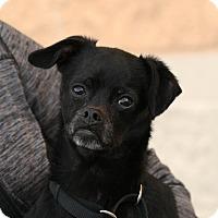 Adopt A Pet :: Jane - Palmdale, CA