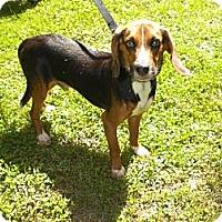 Adopt A Pet :: Caleb Hughes - Waldorf, MD