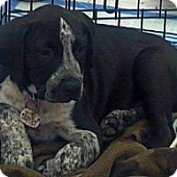 Adopt A Pet :: Jupiter - Phoenix, AZ