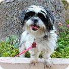 Adopt A Pet :: Rosie Sue - 10lbs