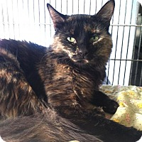 Adopt A Pet :: Mystique - Newport Beach, CA