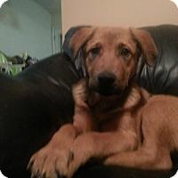 Adopt A Pet :: Teddy - Huntsville, TN