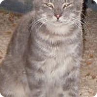 Adopt A Pet :: Hoshi - Jacksonville, NC