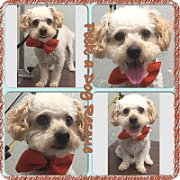 Adopt A Pet :: Burt - South Gate, CA