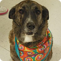Adopt A Pet :: Sheba - Ormond Beach, FL