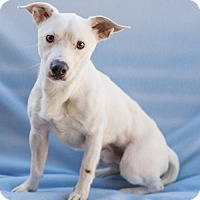 Adopt A Pet :: Eeyore - Atlanta, GA