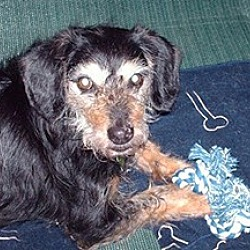 Photo 1 - Terrier (Unknown Type, Medium) Mix Dog for adoption in Homer, New York - Beau