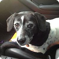 Adopt A Pet :: Russell - Marietta, GA