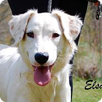 Adopt A Pet :: Elsa - Daleville, AL