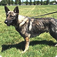 Adopt A Pet :: Onyx - Pleasant Grove, CA