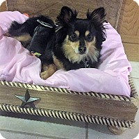 Adopt A Pet :: Magnum - conroe, TX