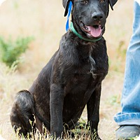 Adopt A Pet :: DANIEL - Poway, CA