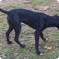 Adopt A Pet :: Princess - Claremont, NC