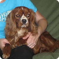 Adopt A Pet :: Scarlett - Salem, NH