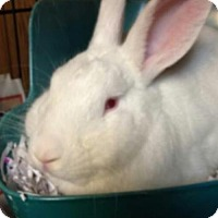 Adopt A Pet :: (Hoppy) Landin - Paradis, LA