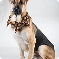 Adopt A Pet :: Zepp - Irving, TX