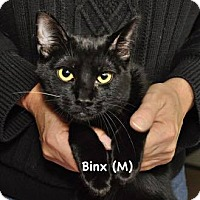 Adopt A Pet :: Binx - West Orange, NJ