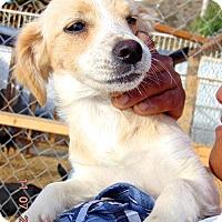 Adopt A Pet :: Glenda - San Diego, CA