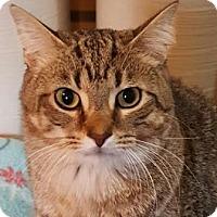Adopt A Pet :: Noodles - Walworth, NY