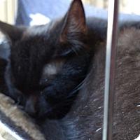 Adopt A Pet :: Ninja - Yuba City, CA
