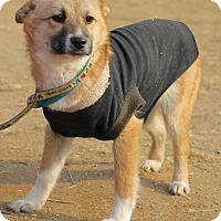 Adopt A Pet :: Pluto - Smithtown, NY