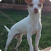 Adopt A Pet :: Twinkie (Male) - Los Angeles, CA