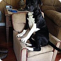 Adopt A Pet :: JASPER - Spring Valley, NY