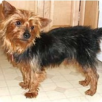 Adopt A Pet :: Xada - Mooy, AL