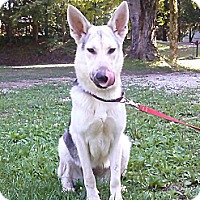 Adopt A Pet :: Letti - Hollis, ME