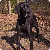 Adopt A Pet :: Molly - Salem, MA