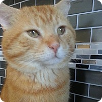 Adopt A Pet :: Rufus - Oakville, ON