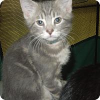 Adopt A Pet :: Cloudy - Medina, OH