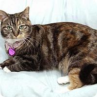 Adopt A Pet :: Brandi - Laguna Woods, CA