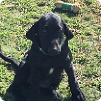 Adopt A Pet :: Houdini - Hagerstown, MD
