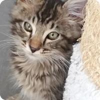 Adopt A Pet :: Josiah - Davis, CA