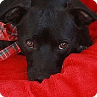 Adopt A Pet :: Cole - san diego, CA