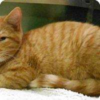 Adopt A Pet :: Quinn - Oskaloosa, IA