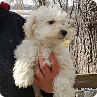 Adopt A Pet :: Brent - ADOPTED!! - Antioch, IL